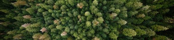 Washington Environmental Council