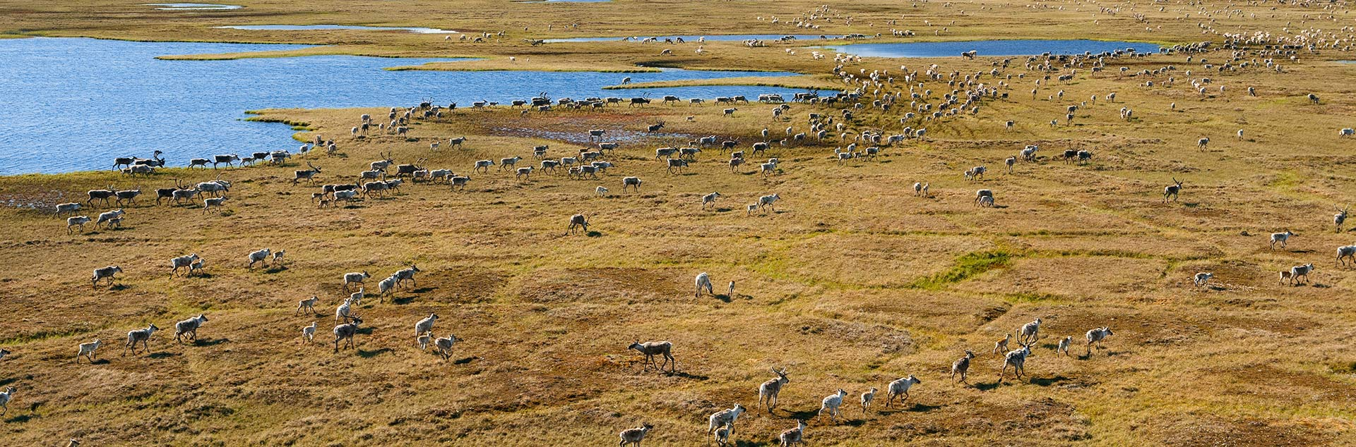 Protect the Arctic Refuge from future oil and gas drilling.